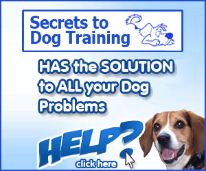 Hundetraining-Geheimnisse